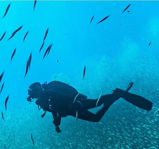 Shark Shield - Freedom7 - Ocean Guardian