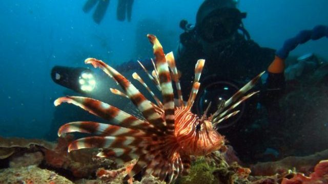 Lion Fish Underwater Sports